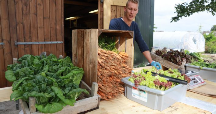 Verse groenten van Yn'e Sinne Farm