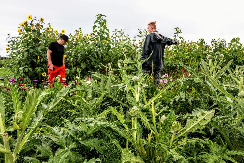 Kok Jeroen van Zuijlen krijgt een rondleiding op de tuini van Yn'e Sinne Farm.