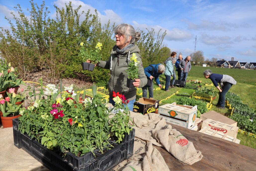 Bloemen te koop bij plantjesmarkt Jirnsum.