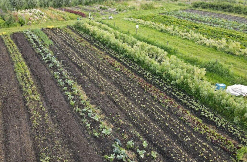 Dronefoto tuin Yne Sinne Farm